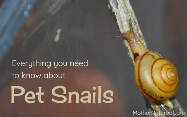 Pet snails