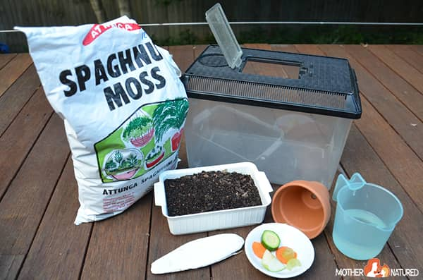 howto look after garden snails