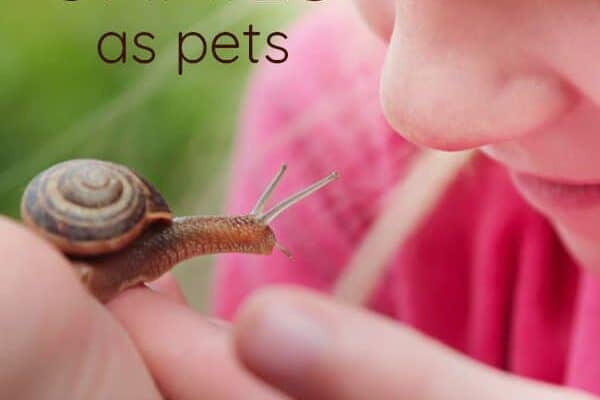 Keeping Pet Snails: Everything you need to know about snail care!