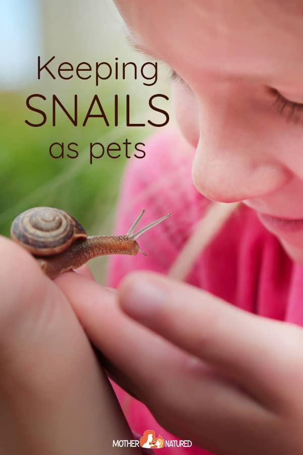 Snails as Pets