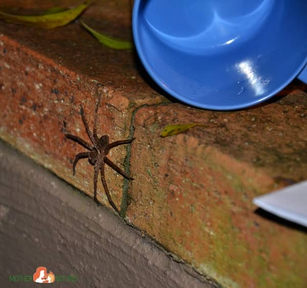 Spider Release