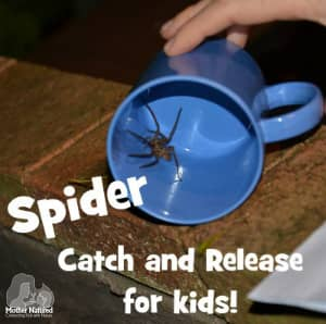 How to safely Catch A spider