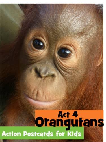 Orangutans image