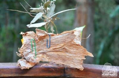 Paper Bark Crown