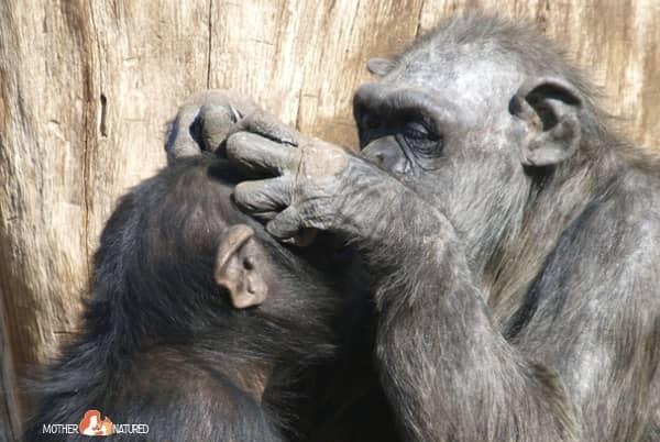 Animal Friendships can teach us