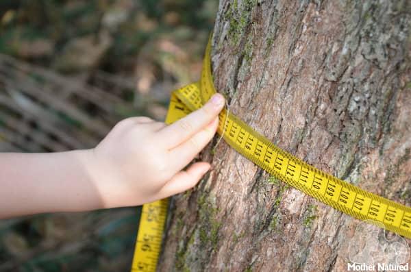 Circumference of tree activity