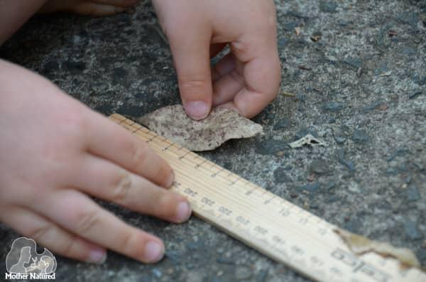 Measuring leaf with ruler