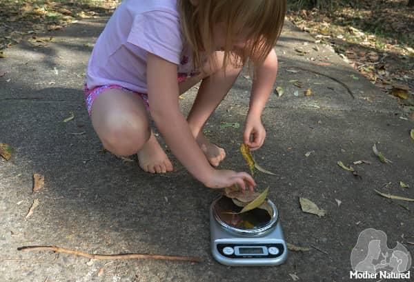 weighing leaves