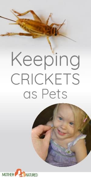 Pet crickets
