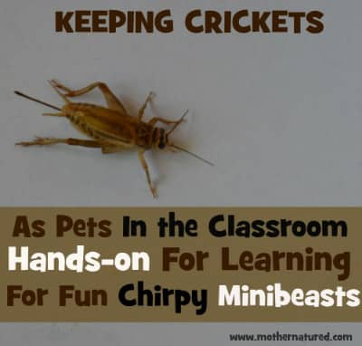 Crickets as Pets
