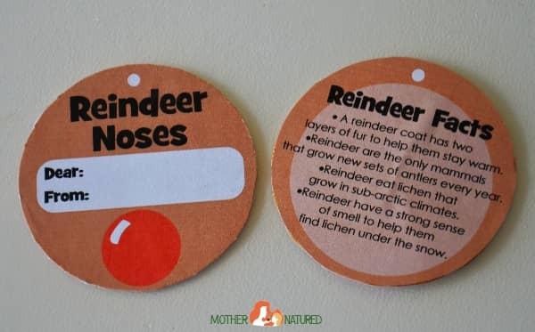 Reindeer-Noses