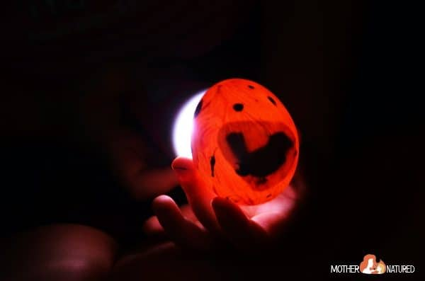 An egg candling activity for curious kids!