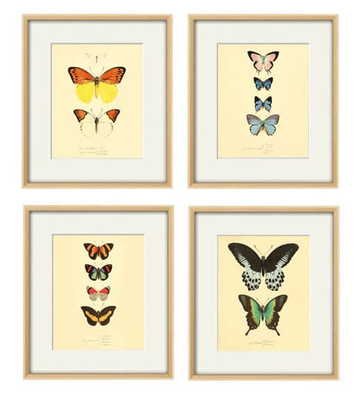 Antique style butterfly wall art