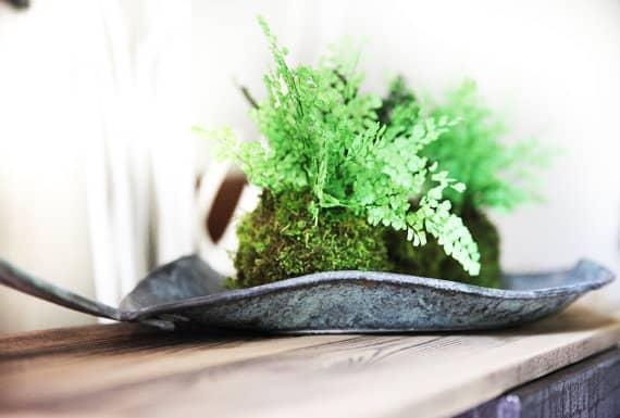 Moss ball gift idea