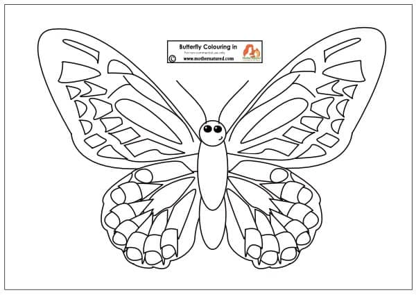 Butterfly Colouring in Printable