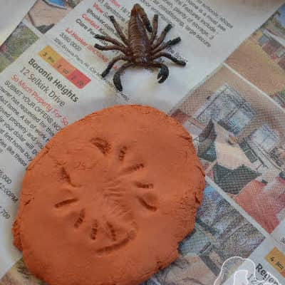 Clay Fun: How to make clay fossils