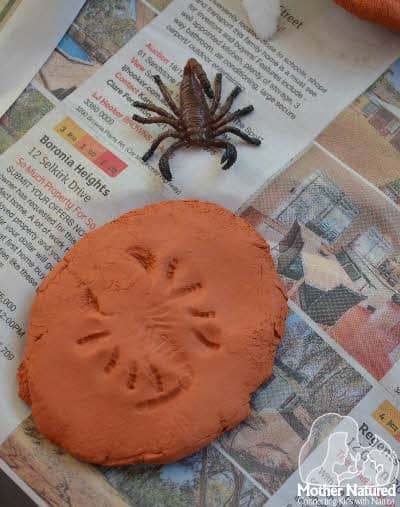 Making clay Fossils