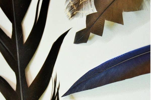 Fine motor fun: Cutting patterns in feathers