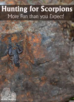 Scorpion Hunting - More fun than you expect!