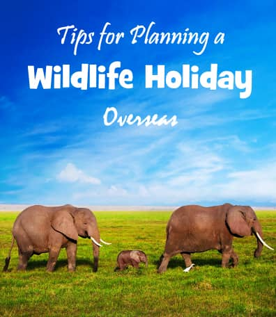 planning a wildlife holiday