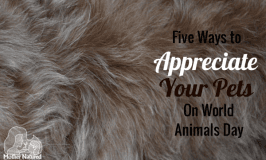 Five ways to appreciate your pets on World Animal Day