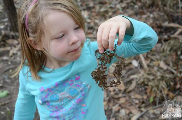 biodegradable leaf