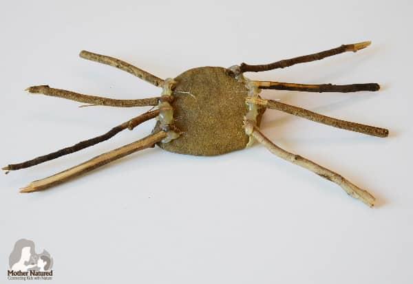 Spider Nature Craft