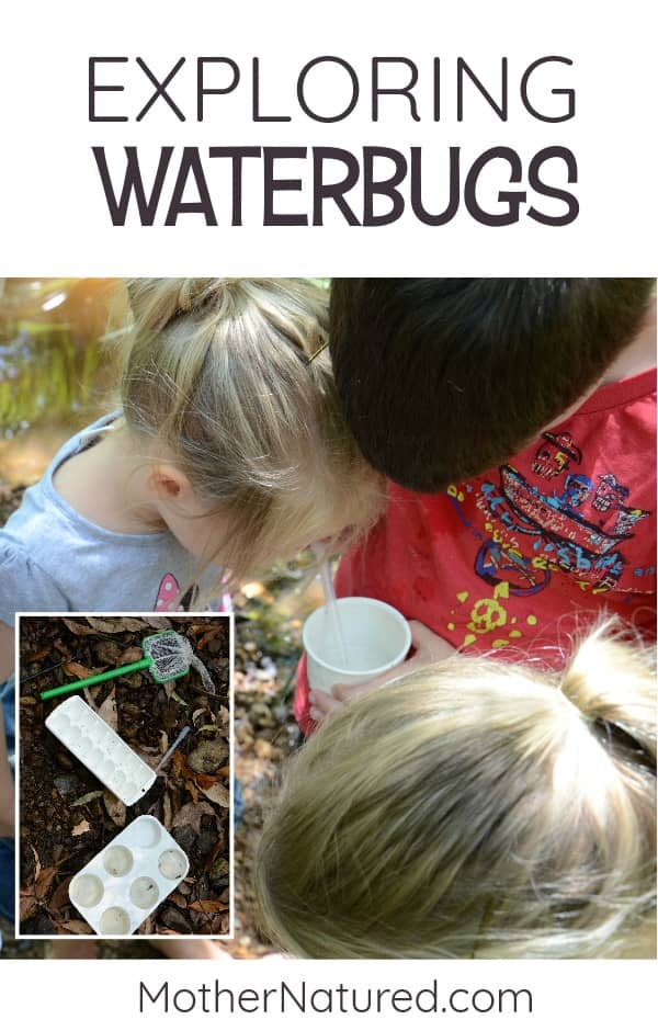 Macroinvertebrates for kids