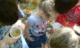 Macroinvertebrates for kids: exploring waterbugs