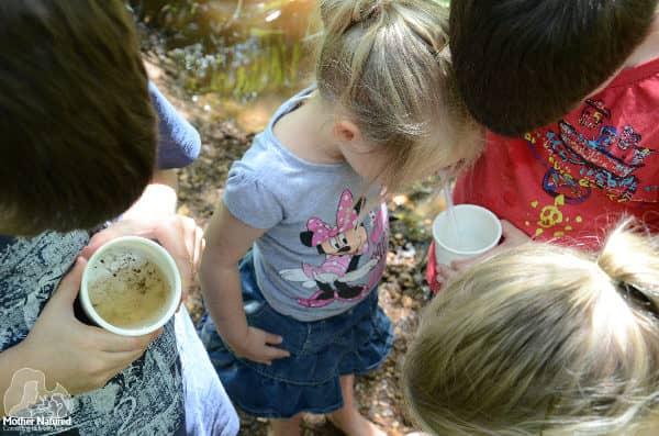 Macroinvertebrates for kids: exploring waterbugs