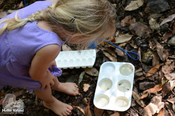 waterbug activity