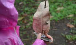 Make nature boats with your kids
