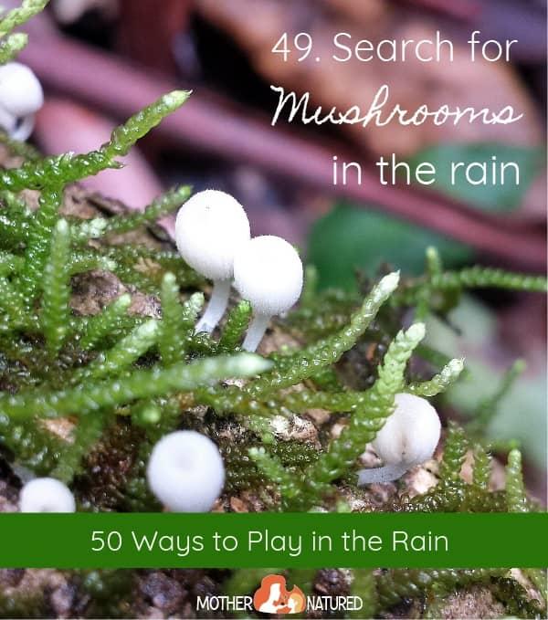 Find mushrooms in the rain