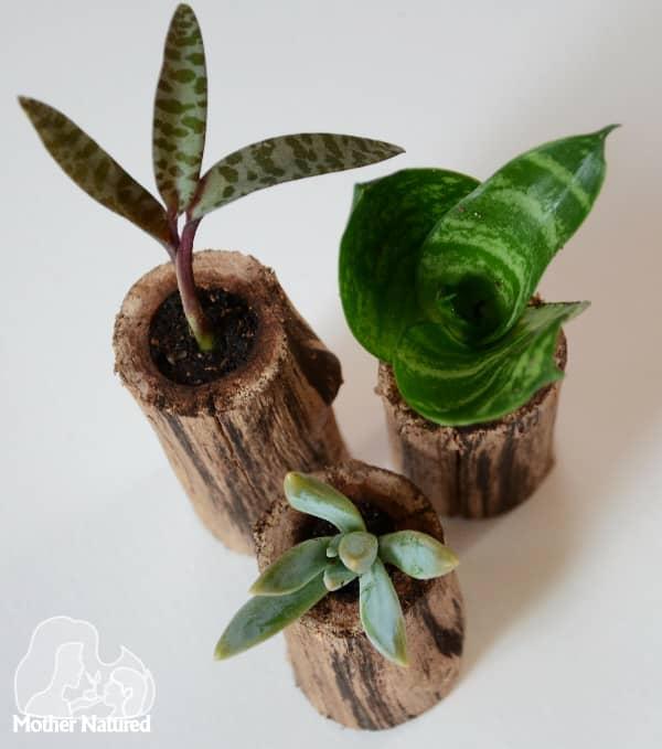 Succulent Pots DIY