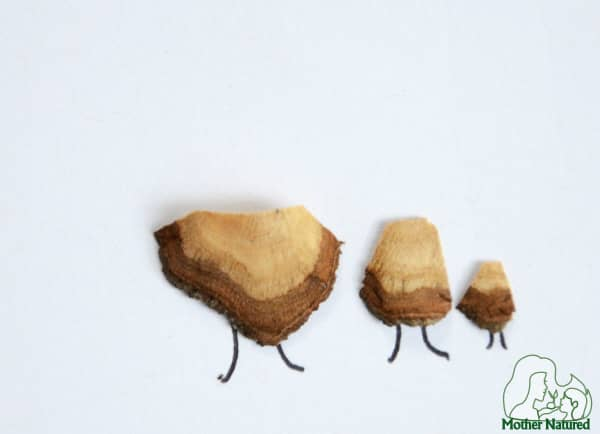 Nature Crafts: Pencil Shaving Crafts