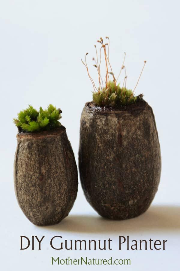 DIY Gumnut Moss Planter