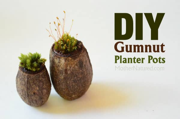 DIY gumnut planter pots that will make you squeal
