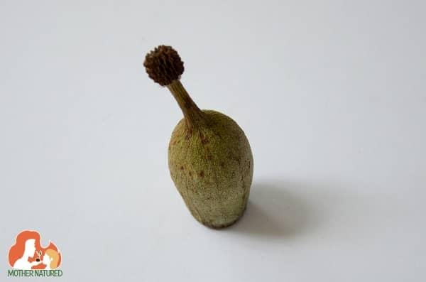 Gumnut craft