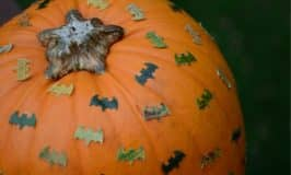 Make a batty pumpkin for Halloween