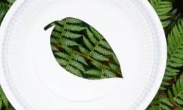 Nature silhouette craft using paper plates
