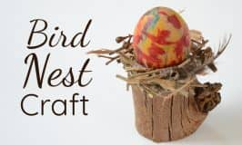 Beautiful bird nest craft
