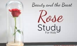 Beauty and the Beast Inspired Rose Study