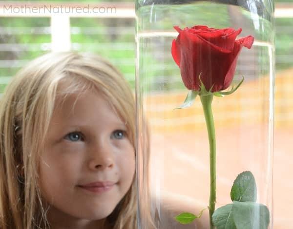 Rose Activity