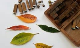 Learning letters by stamping leaves