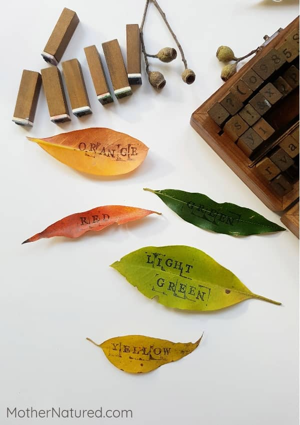 Literacy and leaves