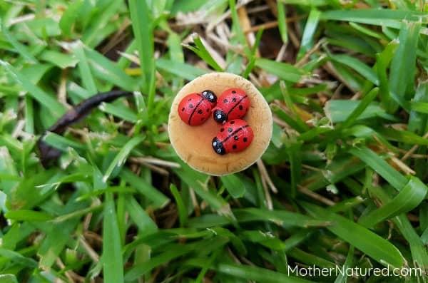 ladybugs on mushrooms