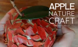 Apple nature craft – the sweetest craft that changes each day
