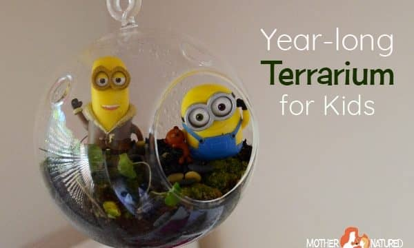 The DIY terrarium for kids that's super fun and changeable