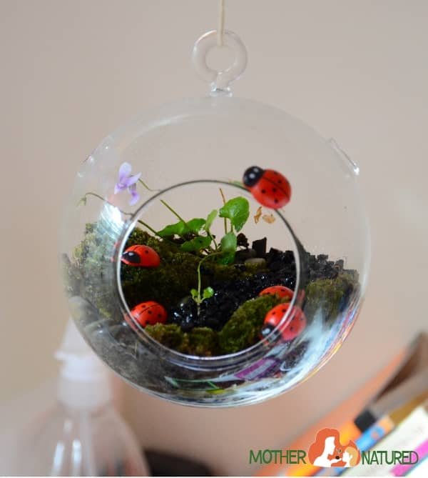Lady Bug Terrarium for Kids
