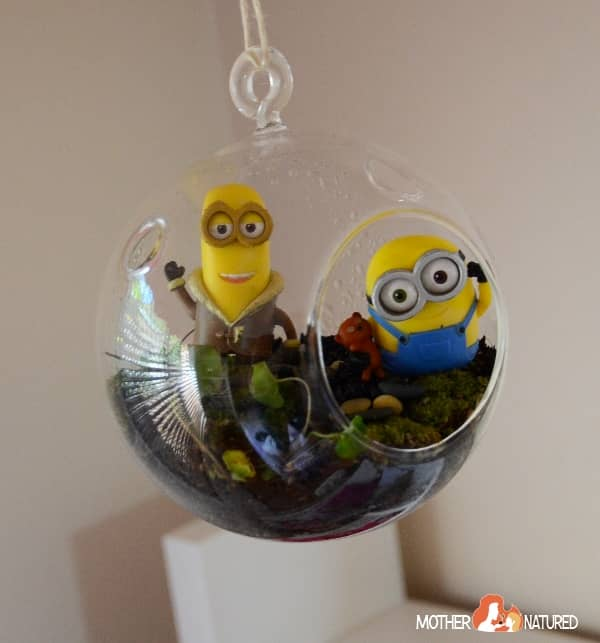 Minion Terrarium for kdis